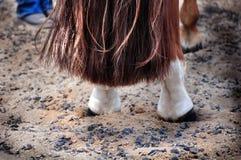 Pferdeendstück Stockbild