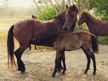 Pferdefütterung Stockfotos