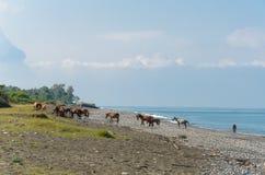 Pferdefamilie an einem sonnigen Sommertag kam, Wasser an der Küste zu trinken lizenzfreie stockfotografie
