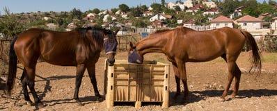 Pferdefrühstück Stockfotos