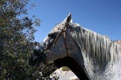 Pferdefreunde stockfotos