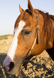 Pferdegefühl lizenzfreie stockfotografie