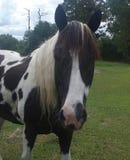 Pferdegesicht lizenzfreie stockbilder