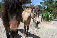 Pferdegesicht Stockfoto