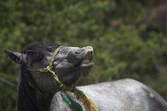 Pferdegesicht mit Lächeln lizenzfreie stockbilder