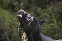 Pferdegesicht mit Lächeln lizenzfreie stockfotos