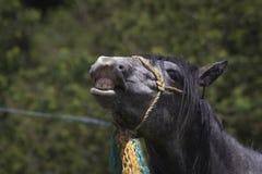 Pferdegesicht mit Lächeln stockbild