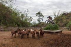 Pferdegespann in der Einschließung bei Wat Phra Archa Lizenzfreie Stockfotos