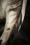 Pferdehaar Stockfoto