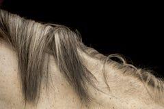 Pferdehaar Lizenzfreie Stockfotografie