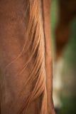 Pferdehaar Lizenzfreies Stockfoto