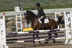 Pferdehalt an der Hürde Lizenzfreies Stockbild