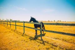 Pferdehengst und Bauernhofzaun stockfotografie