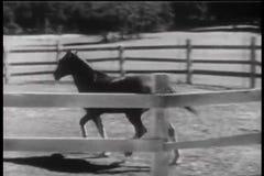 Pferdehereinkommende Hürde und Trinkwasser von der Abflussrinne stock video footage