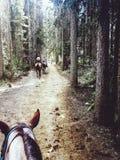 Pferdehinteres Reiten stockbild
