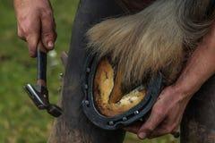 Pferdehuf, der vom Hufschmied/vom Schmied beschuht wird Lizenzfreie Stockfotos