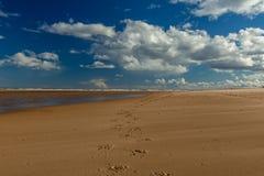 Pferdehufabdrücke auf Strand mit blauem Himmel Stockbild