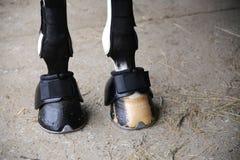 Pferdehufe von Eisbeinen schließen oben Lizenzfreie Stockfotos