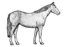 Pferdeillustration, Zeichnung, Stich, Linie Kunst, realistisch Stockbild