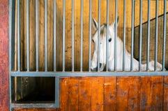 Pferdeinnerestall Lizenzfreies Stockfoto