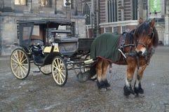 Pferdekampfwagen Lizenzfreie Stockfotos
