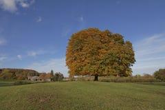 Pferdekastanienbaum (Aesculus hippocastanum) Conkerbaum im Herbst, Lengerich, Nordrhein-Westfalen, Deutschland Stockbilder