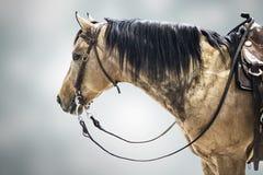 Pferdekonkurrentenbraun lokalisierter Tiersporthintergrund Lizenzfreie Stockfotografie