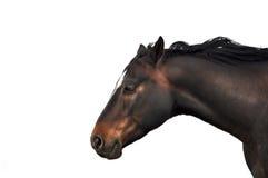 Pferdekopf auf weißem Hintergrund Stockfotos