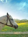 Pferdekopf auf Weidenhintergrund. Stockbild