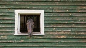Pferdekopf, der aus Scheune heraus haftet Stockbilder