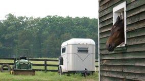 Pferdekopf, der aus Scheune heraus haftet Stockfoto