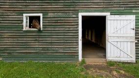 Pferdekopf, der aus Scheune heraus haftet Lizenzfreies Stockbild