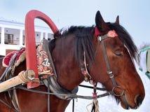 Pferdekopf mit den Augen geschlossen Stockfoto