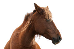 Pferdekopfporträt Stockfotos