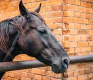 Pferdekopfporträt auf Ziegelsteinhintergrund lizenzfreie stockfotos