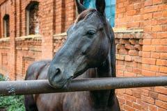 Pferdekopfporträt auf Ziegelsteinhintergrund lizenzfreie stockbilder