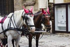 Pferdekutsche auf Wien-Hauptplatz, Weinlesetransport Lizenzfreie Stockfotos