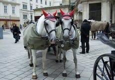 Pferdekutschfahrt in Wien lizenzfreies stockbild