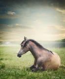 Pferdelügen und Stillstehen auf Sommerweide Stockbilder