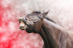 Pferdelachen auf Herzfeiertagshintergrund Stockfotografie