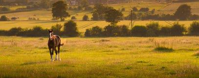 Pferdelandschaft bei Sonnenuntergang Lizenzfreie Stockfotografie