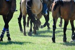 Pferdelaufen Stockfotos