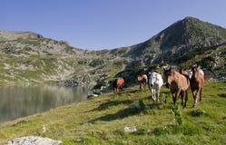 Pferdelaufen Stockfoto