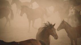 Pferdelaufgalopp im Staub Stockbilder