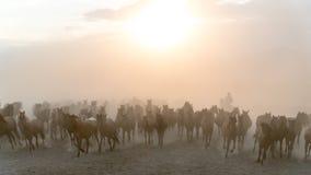 Pferdelaufgalopp im Staub Lizenzfreie Stockfotos