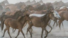 Pferdelaufgalopp im Staub Stockfotos