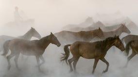 Pferdelaufgalopp im Staub Lizenzfreie Stockbilder