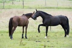 Pferdeliebe Lizenzfreie Stockbilder