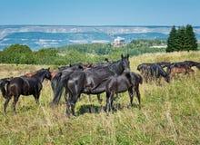 Pferdeliebevolle Momente stockfoto
