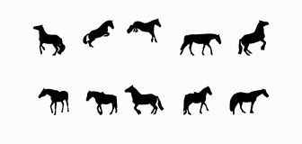 Pferdeläufe, Hopfen, Galopps lokalisiert auf Weiß Lizenzfreies Stockfoto